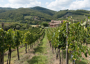 Chianti and Tuscany Countryside Private Wine Tour